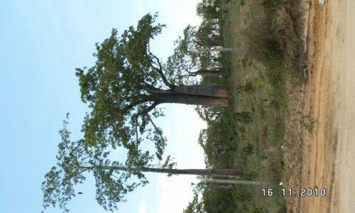 Zdjęcie ANGOLA / luanda / luanda / baobab luanda
