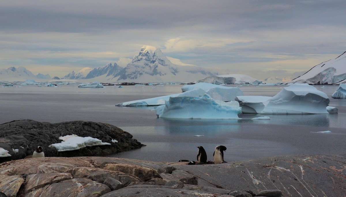 Zdjęcia: Antarkty, zatoka Weddela, Antarktyda, ANTARKTYDA