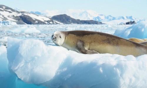 Zdjecie ANTARKTYDA / Antarctic Peninsula / P�wysep antarktyczny / Antarktyda