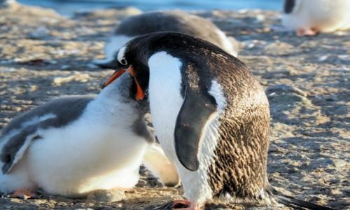 Zdjęcie ANTARKTYDA / Antarctic Peninsula / Półwysep antarktyczny / Antarktyda