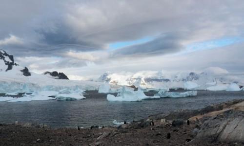 Zdjęcie ANTARKTYDA / zatoka Weddela / Antarkty / Antarktyda