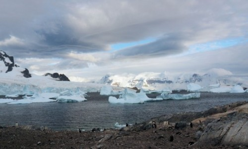 ANTARKTYDA / zatoka Weddela / Antarkty / Antarktyda
