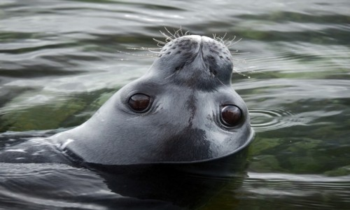 ANTARKTYDA / zatoka Weddela / Antarkty / Oczy Antarktydy