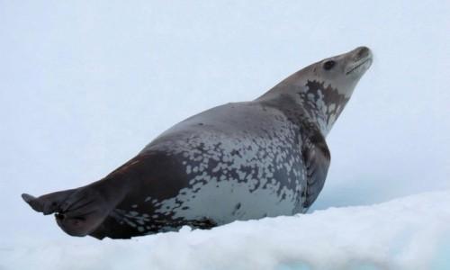 Zdjęcie ANTARKTYDA / Antarctic Peninsula / Antarktyda / CHYBA COŚ WIETRZĘ