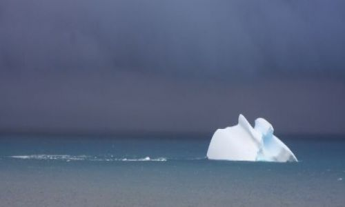 Zdjecie ANTARKTYDA / Antarktyda / King George Island / White on Grey