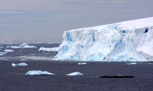 Zdjecie ANTARKTYDA / antarktyda / antarktyda / Lodowce w Paradise Bay