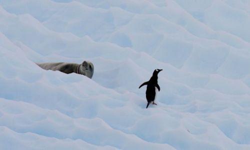 Zdjęcie ANTARKTYDA / antarktyda / antarktyda / koledzy