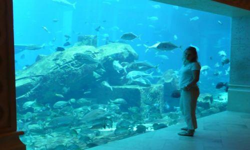 Zdjecie ARABIA SAUDYJSKA / Dubaj / Super akwarium / Zjednoczone Emiraty arabskie
