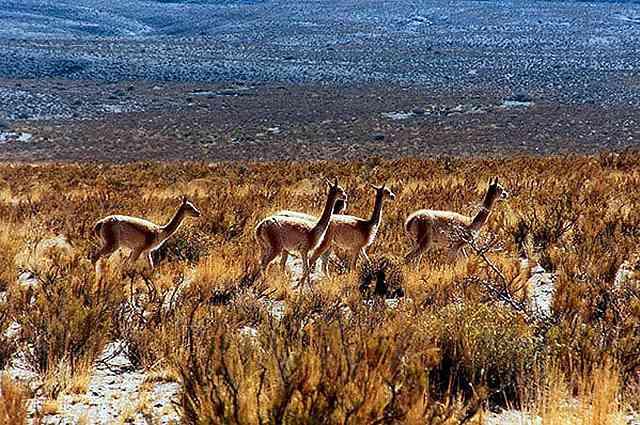 Zdjęcia: spotkanie po drodze, Puna czyli Altiplano, Magiczna Puna, ARGENTYNA