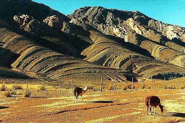 Zdjęcia: lamy hodowlane przez andyjskich gòraki Aymara, Puna czyli Altiplano, Magiczna Puna, ARGENTYNA