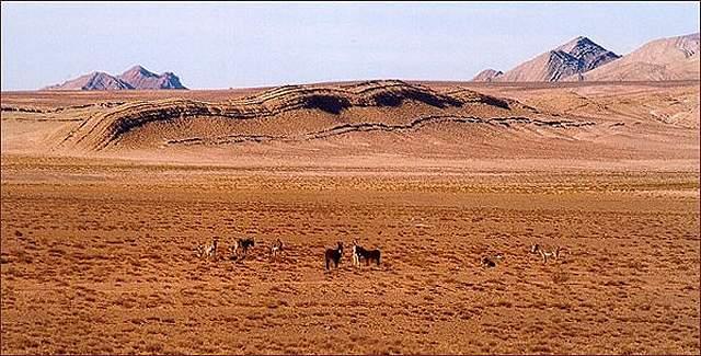 Zdjęcia: krajobraz  Puny, Puna czyli Altiplano, Magiczna Puna, ARGENTYNA