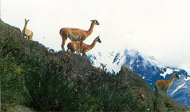 Zdjęcia: na drodze spod Cerro Torre, Patagonia, wysokogòrskie, ARGENTYNA