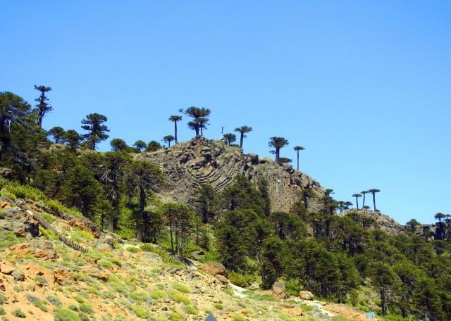 Zdjęcia: Droga nr 242, Las Lajas, Araukarie, ARGENTYNA