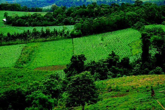 Zdjęcia: soberbio, misjones, plantacje tytoniu, ARGENTYNA