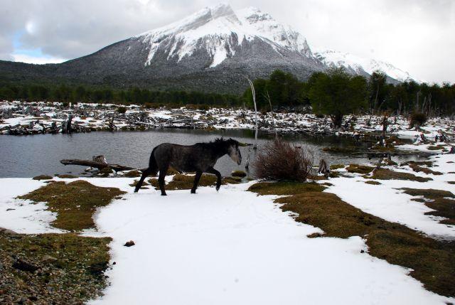 ARGENTYNA / Tierra del Fuego  / Ushuaia / kon udaje osla