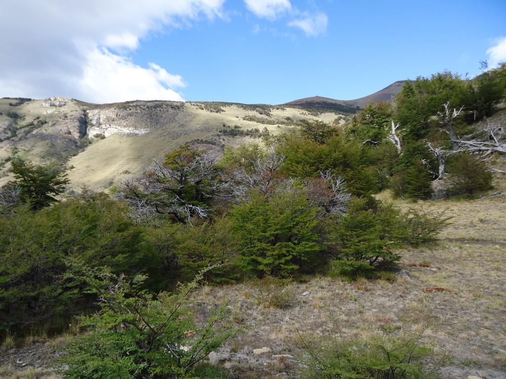 Zdjęcia: PN Los Glaciares (cz. północna), Santa Cruz (Patagonia), Patagoński krajobraz (3), ARGENTYNA