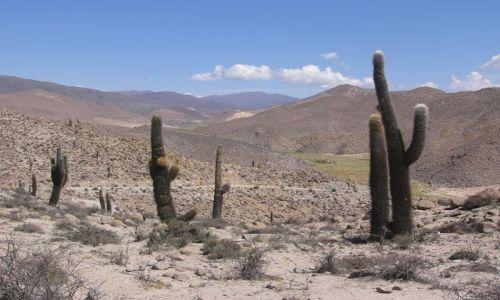 ARGENTYNA / Salta / Santa Rosa de Tastil / Droga
