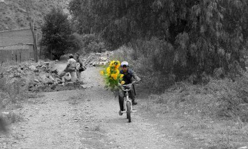Zdjecie ARGENTYNA / - / Humahuaca / Po kwiaty dla dziadka