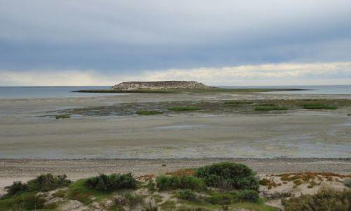 ARGENTYNA / Chubut / Półwysep Valdes / Isla de los Pajaros