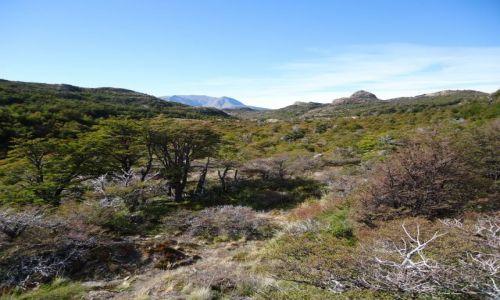 Zdjecie ARGENTYNA / Santa Cruz (Patagonia) / Park Narodowy Los Glaciares (cz. północna) / Widok z drogi