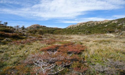 Zdjecie ARGENTYNA / Santa Cruz (Patagonia) / Park Narodowy Los Glaciares (cz. północna) / Podobnie jak w Bieszczadach