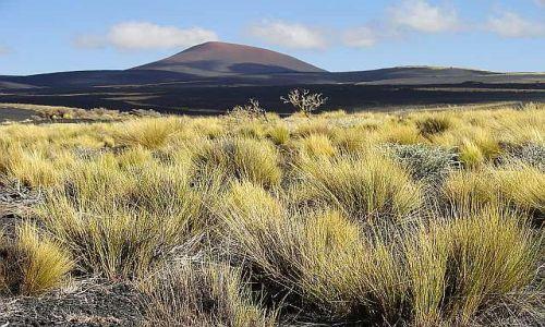 Zdjecie ARGENTYNA / Mendoza / Reserva Payunia / Wulkany Payuni