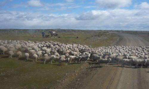 Zdjecie ARGENTYNA / Ushuaia-el Calafate / gdzies w Patagonii / przez Patagonię