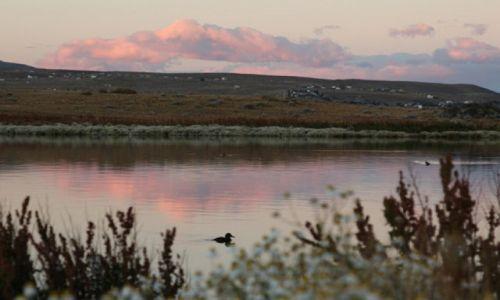 Zdjecie ARGENTYNA / Santa Cruz / El Ccalafate / Flamingos byly ale odfrunely..