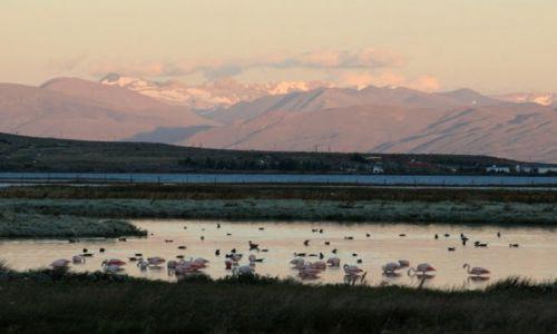 Zdjecie ARGENTYNA / Santa Cruz / Lago Argentino, El Calafate / Flamingi powrocily