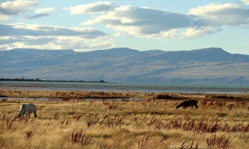Zdjecie ARGENTYNA / Patagonia / El Calafate / Patagoński step