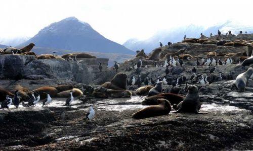 Zdjecie ARGENTYNA / Patagonia / Ushuaia / Kanał Beagle