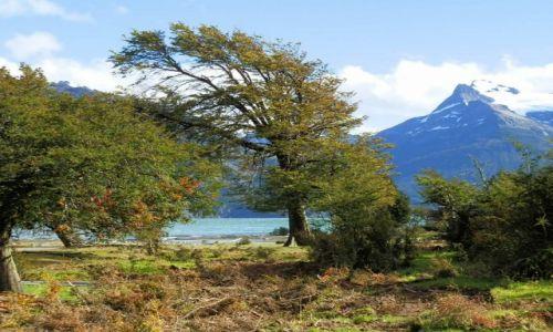Zdjecie ARGENTYNA / Patagonia / Patagonia / Dzrzewa chylące się od wiatru