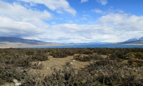 Zdjecie ARGENTYNA / Patagonia / Patagonia / Dzika przyroda