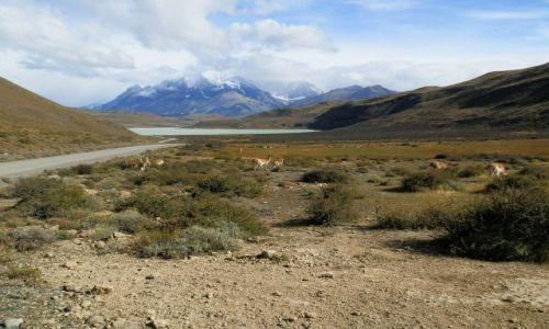 Zdjęcie ARGENTYNA / Ptaragonia / Patagonia / Bezkres piękna i spokoju