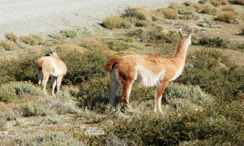 Zdjęcie ARGENTYNA / Patragonia / Patagonia /