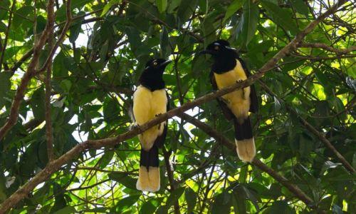 Zdjecie ARGENTYNA / Park Wodospadów Iguazu / jw / Jak myślisz, o co chodzi tym na dole?