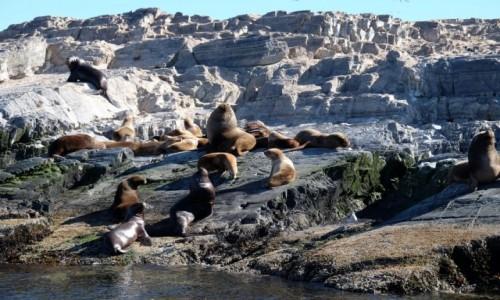 Zdjecie ARGENTYNA / Tierra del Fuego / Kanał Beagla / Fauna na wysepce