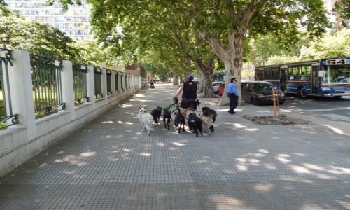 Zdjecie ARGENTYNA / Buenos Aires / Buenos Aires / Wyprowadzacz psow
