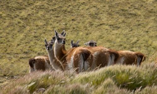 ARGENTYNA / Patagonia / gdzieś przy Ruta40 / O, samochód zatrzymują, pewno focić będą
