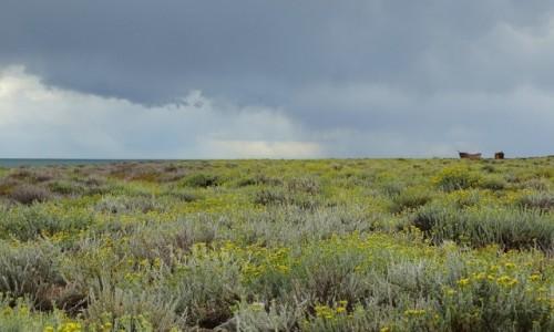 Zdjecie ARGENTYNA / Patagonia-prowincja Santa Cruz / wybrzeże Atlantyku niedaleko Punta Loyola / Harmonia