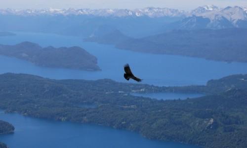 Zdjecie ARGENTYNA / Patagonia / Bariloche / Król andyjskich przestworzy