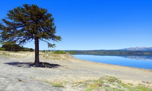 Zdjecie ARGENTYNA / Neuquen / Droga nr 23 / Jezioro Alumine