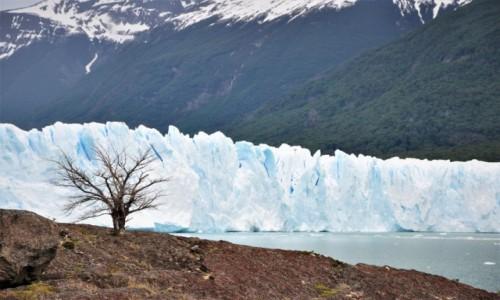 Zdjecie ARGENTYNA / Santa Cruz / Parque Nacional Perito Moreno / Parque Nacional Perito Moreno