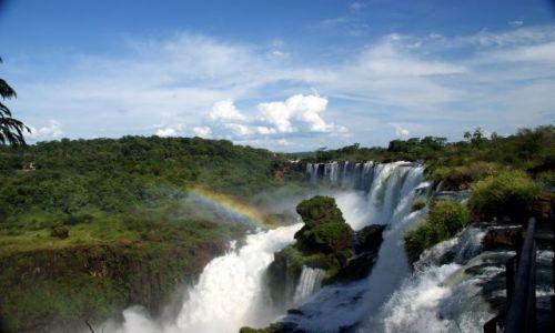 Zdjecie ARGENTYNA / Iguazu / Park Narodowy Iguazu / barwy teczy..