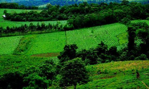 ARGENTYNA / misjones / soberbio / plantacje tytoniu