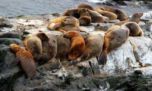 Zdjecie ARGENTYNA / Tierra del Fuego  / Ushuaia / ciepelko rodzinne