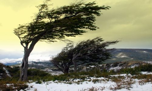 Zdjecie ARGENTYNA / Tierra del Fuego  / Ushuaia / windy