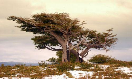 Zdjecie ARGENTYNA / Tierra del Fuego  / Ushuaia / wietrznie bylo