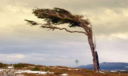 Zdjecie ARGENTYNA / Tierra del Fuego  / Ushuaia / samotny znak czasu