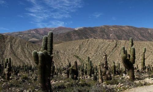 Zdjecie ARGENTYNA / brak / polnocna czesc kraju / w krainie kaktusow